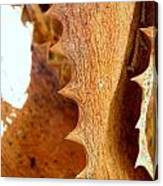 Dry Brown Aloe Vera Leaf Canvas Print