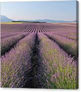English Lavender Field, Valensole, Valensole Plateau, Alpes-de-haute-provence, Provence-alpes-cote D Azur, France Canvas Print