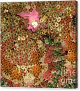 Fluorescent Sea Anemone Canvas Print