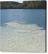 Freshwater Reef Canvas Print