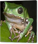 Giant Monkey Frog Canvas Print