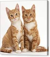 Ginger Kittens Canvas Print
