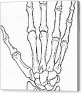 Hand And Wrist Bones Canvas Print