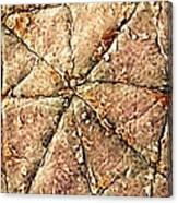 Human Skin Surface, Sem Canvas Print