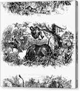 John H. Speke (1827-1864) Canvas Print
