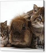 Kittens And Rabbit Canvas Print