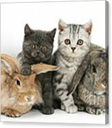 Kittens And Rabbits Canvas Print