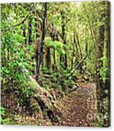 Native Bush Canvas Print