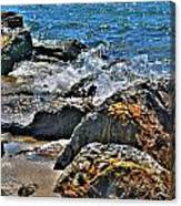 3 Of Mother Natures Finest  Textures Canvas Print
