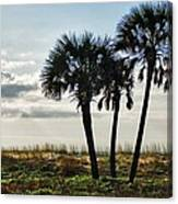 3 Palms On The Beach Canvas Print