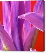 Photograph Of A Dutch Iris Canvas Print