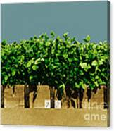 Photoperiodicity In Soybean Plants Canvas Print