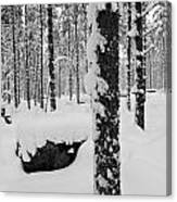 Pine Forest In January Canvas Print