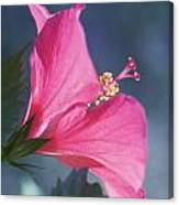 Pink, Blue And Green Canvas Print