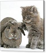 Rabbit And Kitten Canvas Print