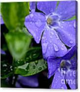 Raindrops On Sorcerers Violet Canvas Print