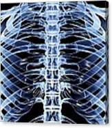 Ribcage, Computer Artwork Canvas Print