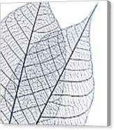 Skeleton Leaves Canvas Print