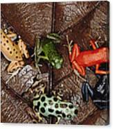Strawberry Poison Dart Frog Dendrobates Canvas Print