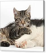 Tabby Kitten & Border Collie Canvas Print
