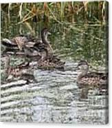 Teal Ducks Canvas Print