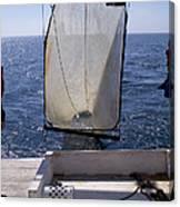 Trawling For Marine Life Canvas Print