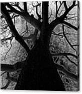Tree Of Thorns Canvas Print