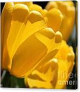 Tulip Named Big Smile Canvas Print