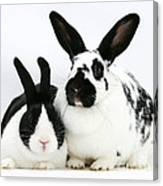 Two Rabbits Canvas Print