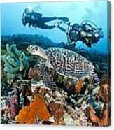 Underwater Photography Canvas Print