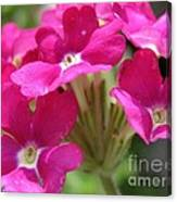 Verbena From The Ideal Florist Mix Canvas Print