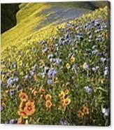 Wildflowers, California Canvas Print