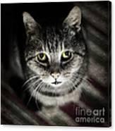 Wonky Eyed Tiger Canvas Print