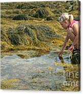 Young Girl Exploring A Maine Tidepool Canvas Print
