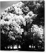 Picnic Tree Canvas Print