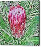 Protea Blossom Canvas Print