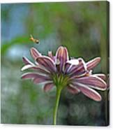 3d Daisy With Bee Canvas Print