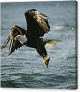 An American Bald Eagle In Flight Canvas Print