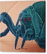 Baby Spider, Sem Canvas Print
