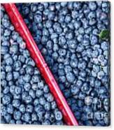 Blueberry Harvest Canvas Print