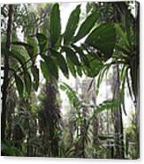 Bromeliad Bromeliaceae And Tree Fern Canvas Print