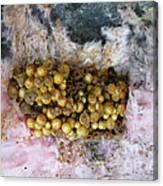 Bumblebee Nest Canvas Print