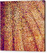 Butterfly Wing, Sem Canvas Print