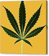 Cannabis Sativa, Marijuana Leaf Canvas Print
