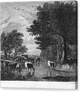 Cattle, 19th Century Canvas Print
