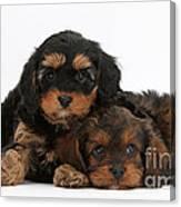 Cavapoo Pups Canvas Print