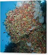Colourful Reef Scene, Ari And Male Canvas Print