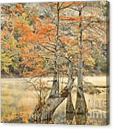 Cypress Trees In The Mist Canvas Print