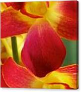 Dendribium Malone Or Hope Orchid Flower Canvas Print