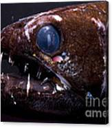 Dragonfish Canvas Print